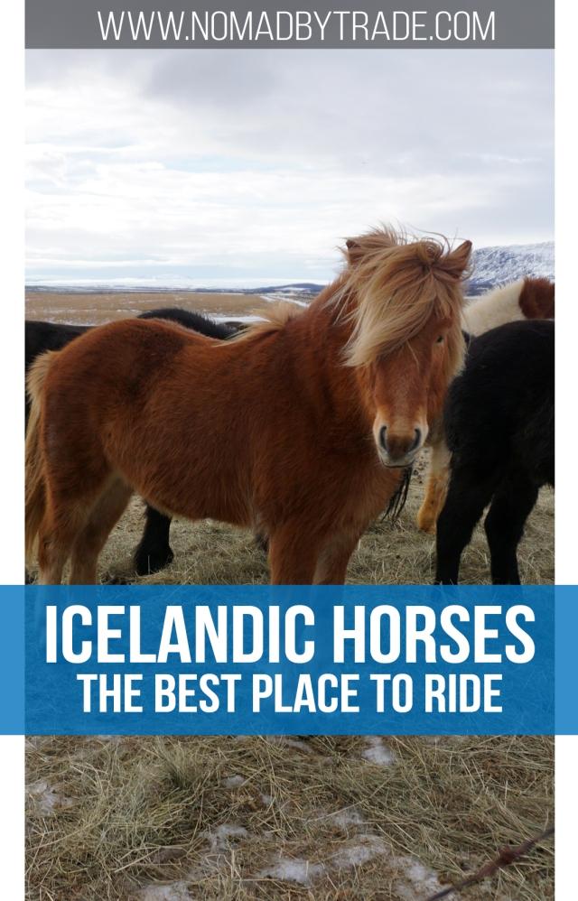 Pin - Horses2
