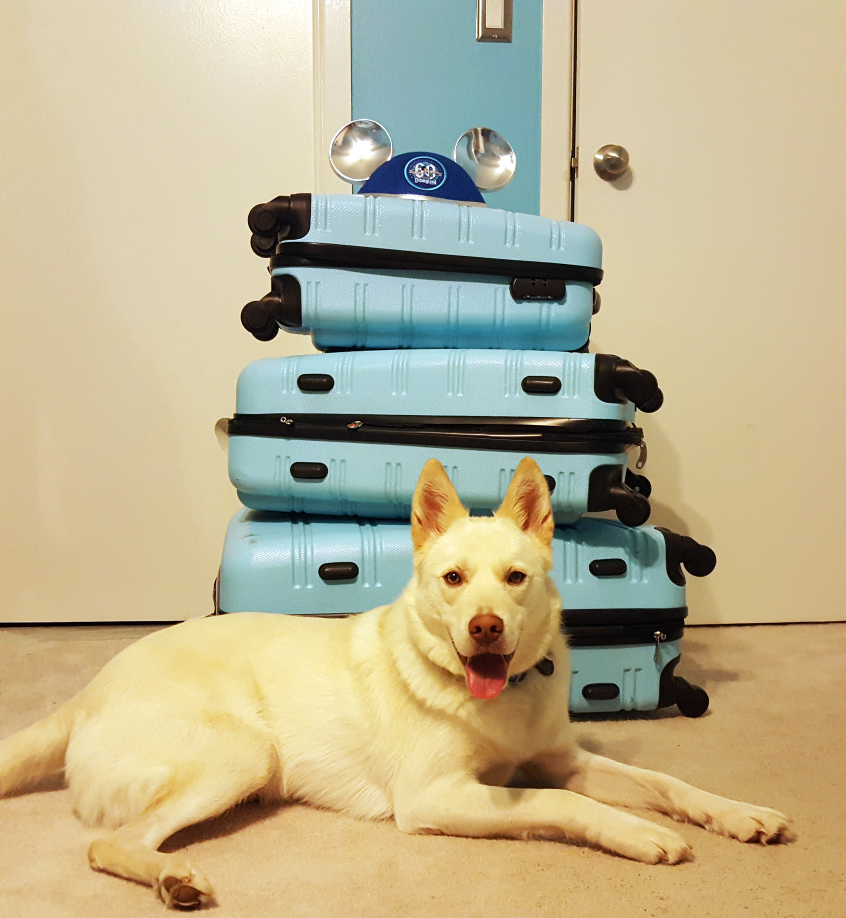 Suitcases and a dog